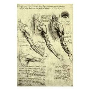 Studies of Human Arm Giclee Poster Print: Home & Kitchen