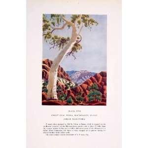 1952 Color Print Oskar Namatjira Art Ghost Gum Tree