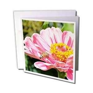 Patricia Sanders Flowers   Pretty Pink Zinnia Flower with