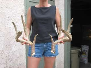 KANSAS MULE DEER SHEDS antlers mount whitetail rack elk