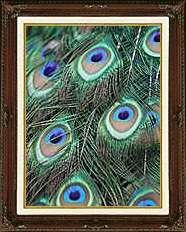FRAMED Peacock Feathers Print Repro PHOTO on CANVAS ART