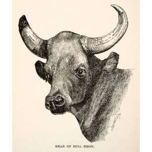 Bull Bison Cow Cattle Buffalo Horn Agriculture Livestock India Dairy