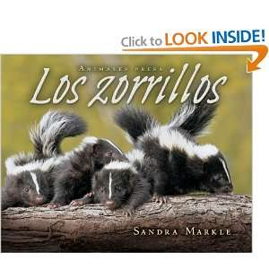 Los zorrillos / Skunks (Animales Presa / Animal Prey