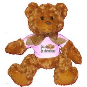 get a real cat Get a havana brown Plush Teddy Bear with