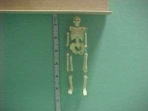 Skeleton   #JK44   Dollhouse Miniature